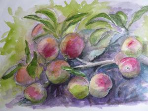 Maureen's apples